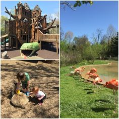 Nashville Zoo at Grassmere, Top 10 Things to Do in Nashville with Kids
