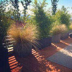 Belvárosi magasabb teraszokon is szeretjük a növényekkel kizárni a zajokat és megteremteni a nyugalmat. 🌿🌷🏡  #teraszepites #teraszbudapest #terasz #urbangarden #lakberendezés #lakberendezésiötletek #kulsoepiteszet #budapest #erkély #ujlipotvaros #penthouse #interiordesign #home #decor #dreamhome #design Penthouse, Budapest, Sidewalk, Home Decor, Decoration Home, Room Decor, Side Walkway, Walkway, Home Interior Design