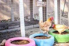 Bain de terre pour les poules avec des pneus. 20 idées géniales avec des pneus