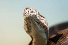 Head-snakes-1326212434_97.jpg (1200×800)