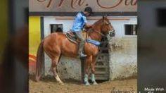 Resultado de imagem para fotos de cavalos de vaquejada Horses, Animals, Animales, Animaux, Animal, Animais, Horse