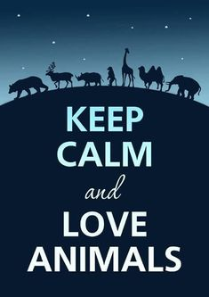 20 Adorable Animals To Melt Your Heart   Animals, Keep Calm and ...
