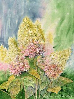Rispenhortensien, Aquarell - Hydrangea Panicle, Watercolor