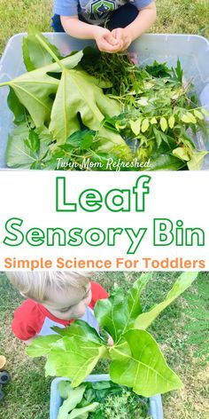 This Leaf Sensory Bin Activity is a perfect science activity for toddlers or preschoolers. Great for sensory play fine motor skills and learning about nature. No prep and easy toddler activity that will keep them busy and having fun! Science Activities For Toddlers, Nature Activities, Infant Activities, Outdoor Preschool Activities, Science Nature, Toddler Sensory Bins, Baby Sensory Play, Sensory Play For Toddlers, Sensory Wall