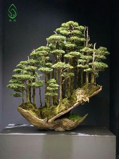Bonsai tips and projects. Ikebana, Jardin Zen Miniature, Miniature Trees, Bonsai Plants, Bonsai Garden, Bonsai Trees, Bonsai Forest, Planting Roses, Small Trees