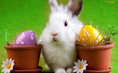 easter bunny   Easter, bunny, wallpapers, wallpaper - 817280