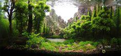 #aquascape by Serkan Cetinkol