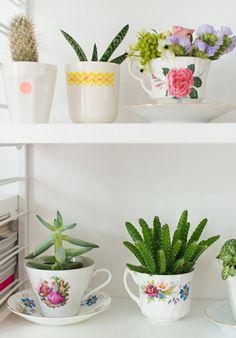 Plantas e flores em pouco espaço