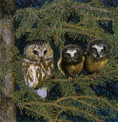 Northern Saw-whet Owl family painting by Craig Lomas. Beautiful Owl, Animals Beautiful, Saw Whet Owl, Owl Artwork, Owl Family, Family Painting, Owl Photos, Creatures Of The Night, All The Pretty Horses