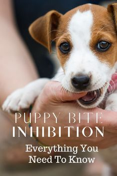 Why Does My Puppy Keep Biting Me Puppytips Puppybiteinhibition Puppybiting Bitinginhibitionindogs Dogtraining Why Do In 2020 Puppy Biting Puppies Puppy Training
