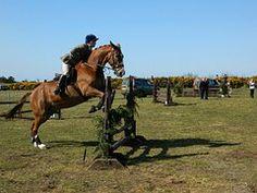 Paard, Springen, Rider, Show