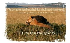 A quote that I have always loved. To start putting together your perfect safari contact us now info@glenbehrsafaris.com or check out our website on www.glenbehrsafaris.com for more info.