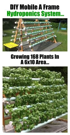 How To Grow 168 Plants In A 6 x 10 Area With A DIY Vertical A-Frame Hydroponic System... http://www.ecosnippets.com/gardening/diy-vertical-a-frame-hydroponic-system/