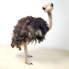 ... and another ostrich...