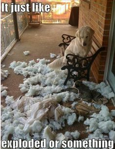 this has been the ending to every dog bed we've owned...yet we keep buying them...