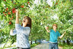 Let's go cherry picking at Yamagata! Tendo, a lovely town  #japankuru #yamagata #travel #trip #onsen #cherry #체리 #야마가타 #온천여행 #텐도시 #힐링여행 #일본여행 #추천여행지 #櫻桃 #山形 #旅行 #蕎麥麵 #美食 #溫泉 #泡湯