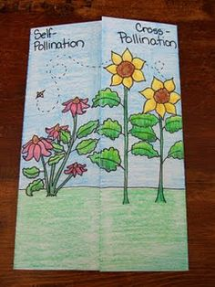 cross-pollination and self-pollination foldable