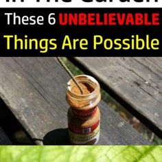 If-You-Use-Cinnamon-In-The-Garden-These-6-UNBELIEVABLE-Things-Are-Possible-696x2383