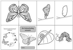 """Ideenreise: Faltheft """"Ein Schmetterling entsteht"""" Schmetterling Insekten Metamorphose You are in the right place about Montessori baby Here we offer you the most beautiful pictures about the Montessor Primary School, Pre School, Elementary Schools, Montessori Baby, Montessori Activities, Kindergarten Portfolio, Garden Animals, Bugs And Insects, Science Lessons"""