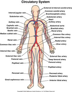 main arteries and veins in the body