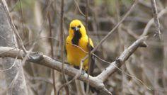 De Sint-Christoffelberg beklimmen - De reisblog van Johnno Willemstad, Parrot, Animals, Parrot Bird, Animales, Animaux, Animal, Animais, Parrots