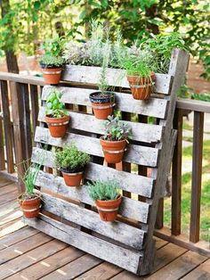 Herb garden free sand wooden rack