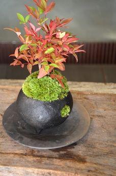 冬の盆栽 新入荷のご案内 : Kitowaの日々