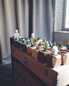 Доброе утро! Мы в @fedorivhub и тут круто. Приходите. #goosucc #гусаквыходногодня #кактусывцентренедорого #cactusworld #gagaga #cacti #succulents