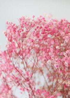 Gypsophila Bouquet, Dried Flower Bouquet, Dried Flowers, Flower Bouquets, Pink Love, Bright Pink, Pastel Pink, Pink Wallpaper, Flower Wallpaper