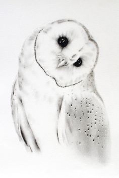 ORIGINAL  Barn Owl Charcoal Drawing  11x14 by JaclynsStudio                                                                                                                                                                                 More