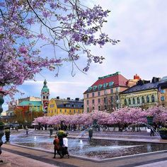 Cherry blossom - Royal Park Stockholm This hardly looks real. Places Around The World, The Places Youll Go, Places To Visit, Around The Worlds, Sweden Stockholm, Stockholm Travel, Kings Garden, Places To Travel, Travel Destinations