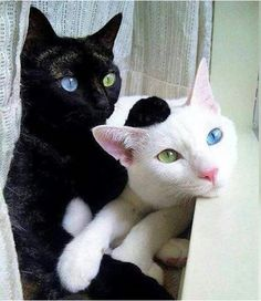 Opposites in everything, opposites attract. Blue Grey, Animales, Black And White, Cats