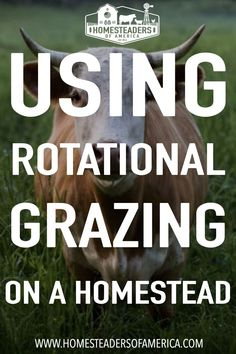 Reasons to Use Rotational Grazing to Raise Pastured Livestock on the Homestead #homestead #selfsufficiency #sheep #cows #poultry #chickens #goats #livestock #farming #sustainability #pastured Livestock Farming, Modern Homesteading, Meat Chickens, Cows, Poultry, Brand Names, Sustainability, Sheep, Prepping