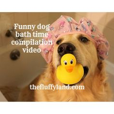 We love this dog bath time compilation video so much that we just have to share! Dog bath time compilation video is simply hilarious and adorable. Funny Dog Videos, Funny Dogs, Relaxed Dog, Compilation Videos, Bath Time, Youtube, Youtubers, Youtube Movies