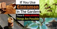 There are so many Cinnamon Uses in the kitchen but did you know it is so useful in the garden that it can transform your garden into lush and healthy place.