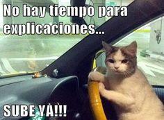 memes de gatos graciosos - Buscar con Google