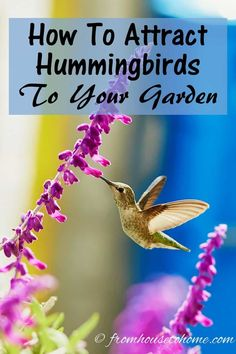 How To Attract Hummingbirds To Your Garden | Want to attract hummingbirds to your garden? Find out how to provide food, water and shelter that will get these pretty birds to visit your yard. #fromhousetohome #hummingbirds #bird #gardeningtips #gardenideas #attracthummingbirds #perennialgarden