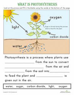 Printables Bill Nye Erosion Worksheet bill nye erosion worksheet abitlikethis video answer key food web answers nye