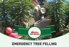 Call Brand's Tree Felling for fast, safe, friendly and reliable tree felling and maintenance services. Contact us on 0861 708 000 or (011) 708-0088 or brandstf@mweb.co.za / office@brandstreefelling.co.za Our Tree Felling teams are equipped with all of the necessary PPE and sanitising equipment. #treefelling #treecutting #dangeroustreeremoval #fallentreeremoval #essentialservicespermit #treefellingsolutions #brandstreefelling