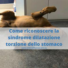 Torsione dello stomaco nel cane: una emergenza da riconoscere in tempo, per non fargli rischiare la vita
