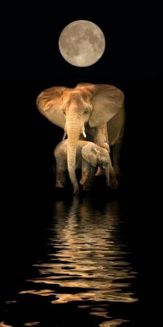 A beautiful image of mama elephant and baby