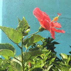 Take time to stop & smell the #flowers!  #thursdaythoughts #bethechange support #consciousclothing #ethicalfashion #local #eco #clothing #sustainablefashion #ecofriendly #locallymade #localbrand #earth #ethicallymade #summerstyle #USAmade by #MAJAMAS #madeinchicago #madeintheusa #lovesummer #lovejuly #flower #flowerlover #explore #nature #naturelover #naturegram #floweroftheday #flowersofinstagram #sunshine