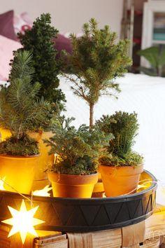 Oravanpesä: JOULUKUUSIMETSÄ. Planter Pots, Instagram