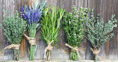 Bunches of herbs. Bunches of fresh aromatic herbs tied with string for drying , Herbs Image, Herb Bouquet, Kai, Different Types Of Tea, Perfect Cup Of Tea, Aromatic Herbs, Herbs Indoors, Dry Leaf, Artists