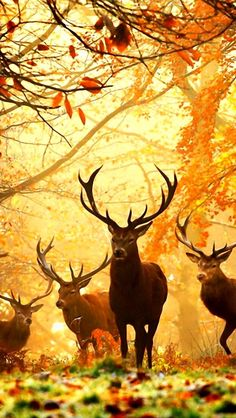 1000 images about phone wallpaper on pinterest browning - Browning deer cell phone wallpaper ...