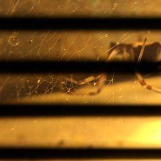 What lies beneath. #macro #olloclip #olloclipmacro #insect #nightmacro #weeklymobilemacro