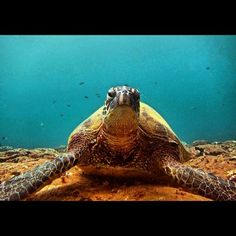 Great turtle pic from @scubabum513. To see your photo here, tag it #PADI on Instagram. We choose one per day to share as our favorite.