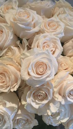 My Love Plants Roses Flowers Wallpapers Backgrounds All Boo Blossoms