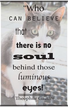 on cats... and also motivation for vegetarians