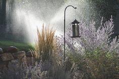 Morning sprinklers